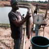 The Business of Mud-catfish Farming